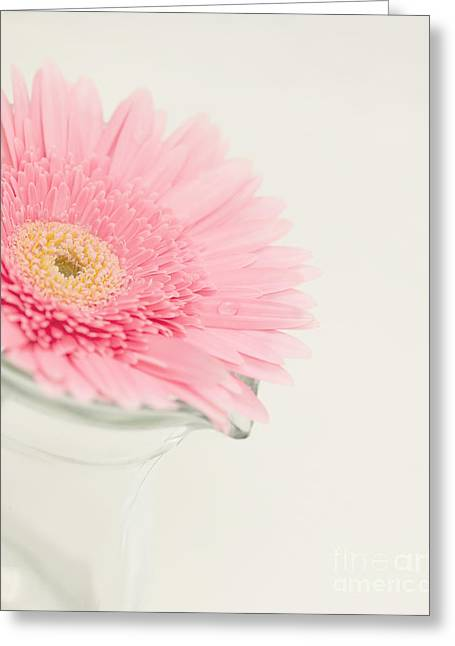 Pink Flower Prints Photographs Greeting Cards - One Single Drop Greeting Card by Kay Pickens
