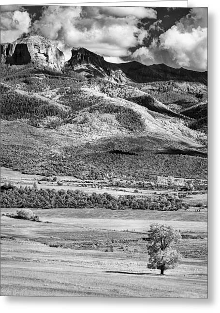 Colorado Artwork Greeting Cards - One Stands Alone Greeting Card by Jon Glaser
