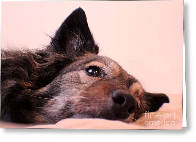 Maia Greeting Cards - One Tired Pup Greeting Card by Jacqueline Barden