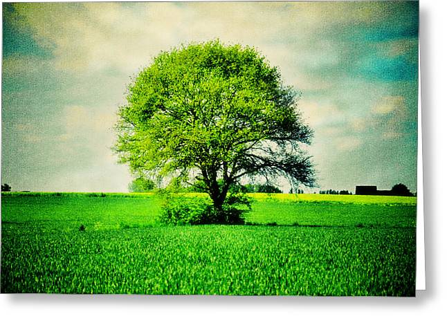 Nicole Frischlich Greeting Cards - One Tree for All Greeting Card by Nicole Frischlich