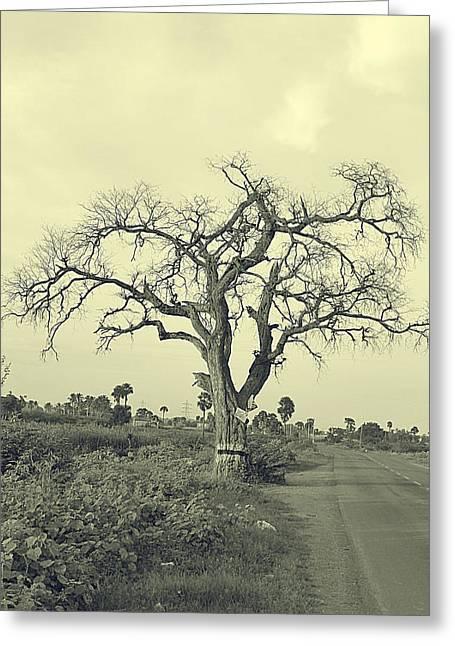 Label Greeting Cards - One Tree Greeting Card by Girish J