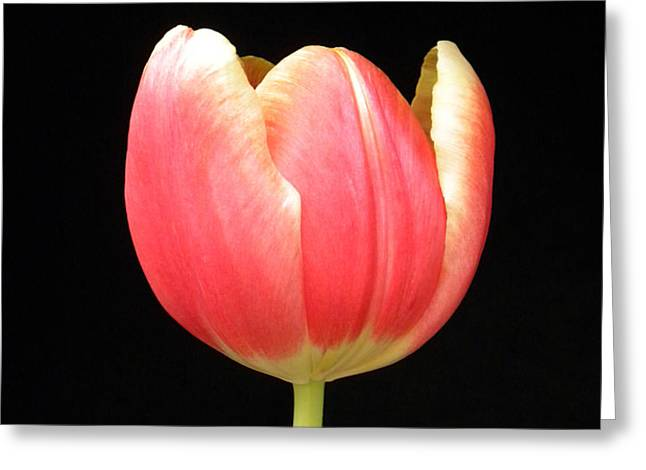 One Tulip Greeting Card by Julie Palencia