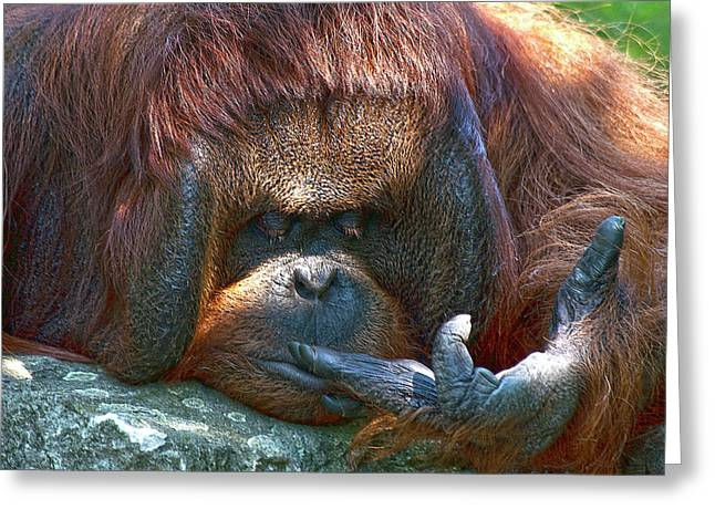 Orang-utan Greeting Cards - One Two Three  Greeting Card by Heiko Koehrer-Wagner