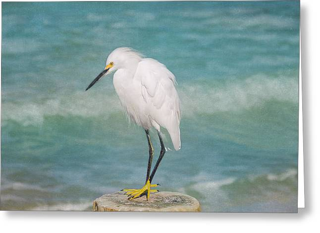 Kim Photographs Greeting Cards - One with Nature - Snowy Egret Greeting Card by Kim Hojnacki