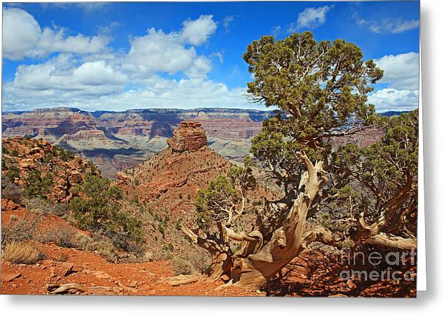 South Kaibab Trail Greeting Cards - ONeill Butte Greeting Card by Lynne Sutherland