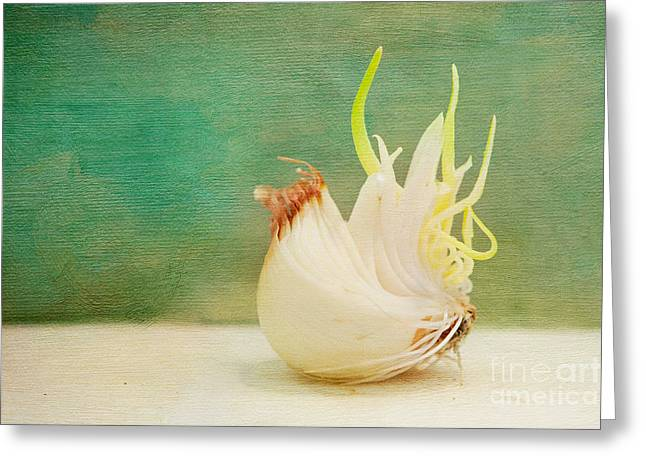 Onion Bird Greeting Card by Kay Pickens