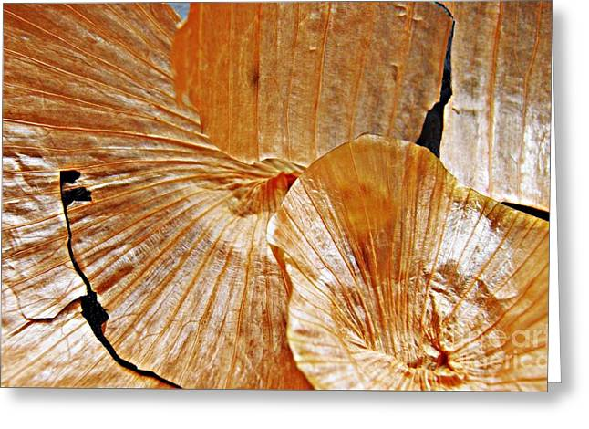 Onion Greeting Cards - Onion Skin Abstract Greeting Card by Sarah Loft