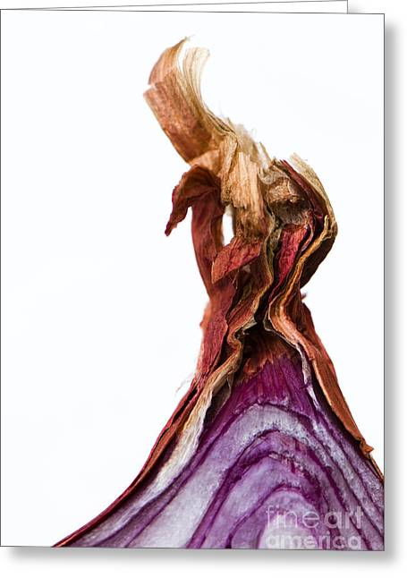 Culinary Greeting Cards - Onion Top Greeting Card by Anne Gilbert