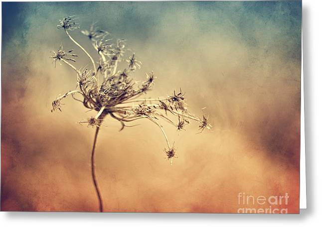 Plants Digital Art Greeting Cards - Only Greeting Card by Diana Kraleva