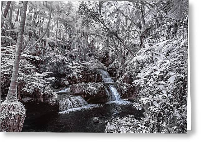 Abstract Water And Fall Leaves Greeting Cards - Onomea Falls in Infrared 1 Greeting Card by Jason Chu