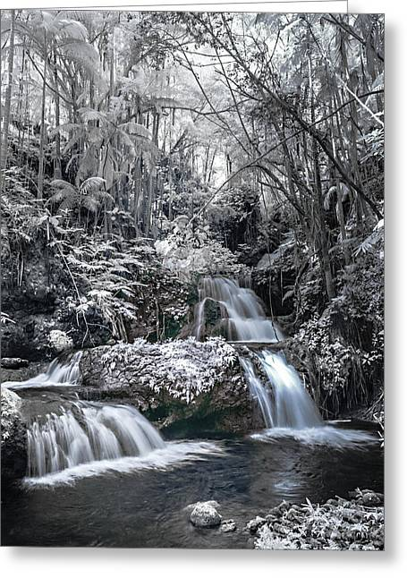 Abstract Water And Fall Leaves Greeting Cards - Onomea Falls in Infrared 2 Greeting Card by Jason Chu