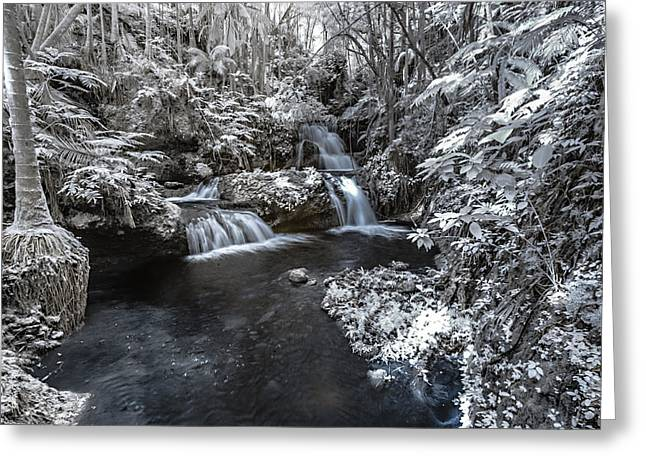 Abstract Water And Fall Leaves Greeting Cards - Onomea Falls in Infrared 3 Greeting Card by Jason Chu