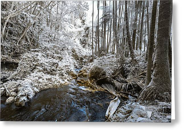 Onomea Stream In Infrared Greeting Card by Jason Chu