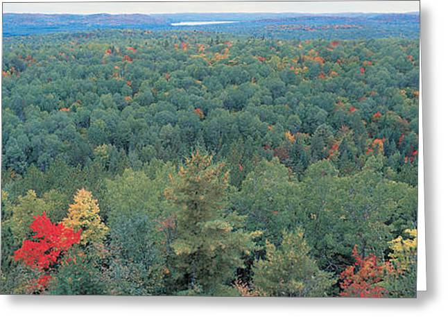 Scenic Woodlands Greeting Cards - Ontario Canada Greeting Card by Panoramic Images