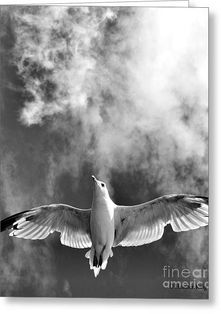 Flying Seagull Greeting Cards - Onward and upward Greeting Card by Heather King