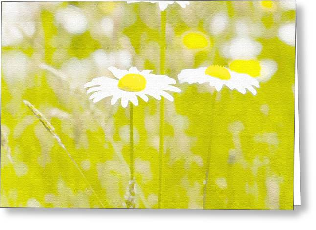 Oopsy Daisy Greeting Card by Artist and Photographer Laura Wrede