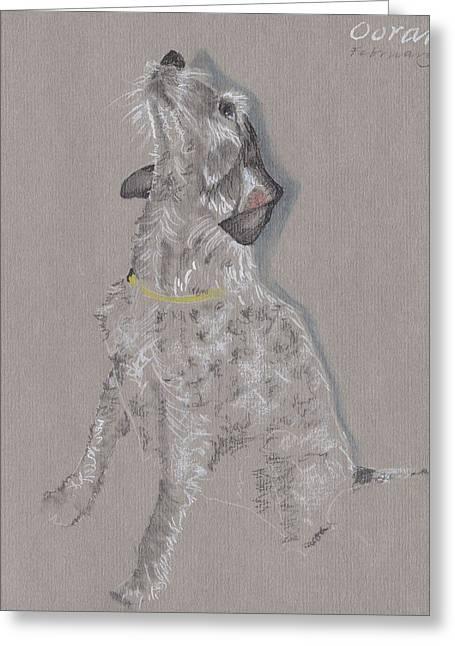 Puppies Drawings Greeting Cards - Oorah Greeting Card by Daphne Miller
