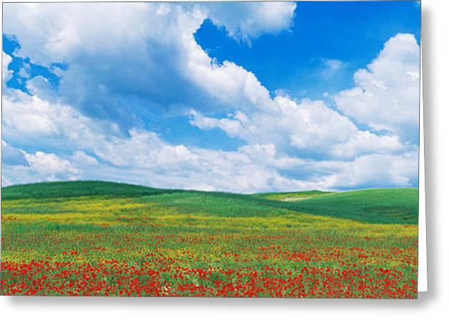Flower Blossom Greeting Cards - Open Field, Hill, Clouds, Blue Sky Greeting Card by Panoramic Images