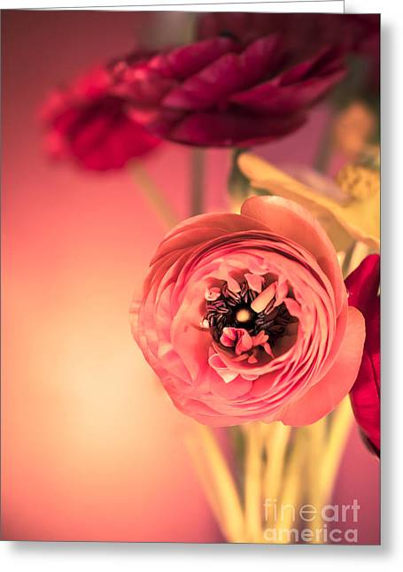 Ranunculus Greeting Cards - Open Heart Greeting Card by Jan Bickerton