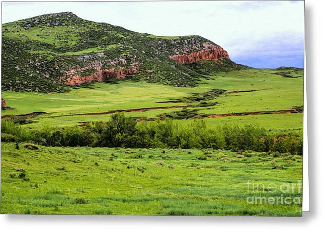 Grazing Snow Greeting Cards - Open Range Greeting Card by Jon Burch Photography