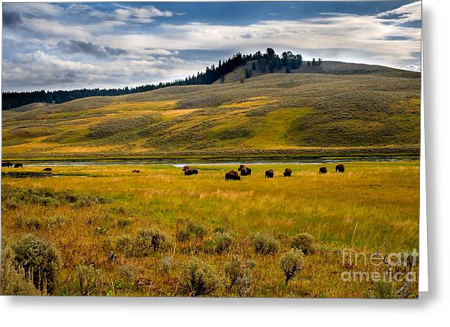 U.s. Open Photographs Greeting Cards - Open Range Greeting Card by Robert Bales