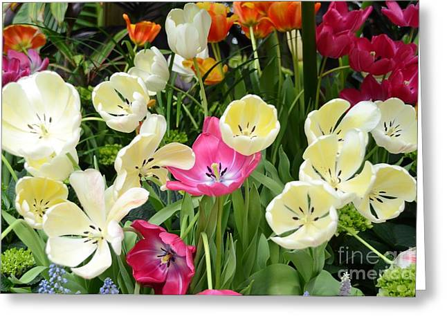 Open Tulips Greeting Card by Kathleen Struckle