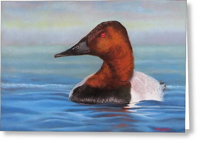 Wetlands Pastels Greeting Cards - Open Water Canvasback Greeting Card by Marcus Moller