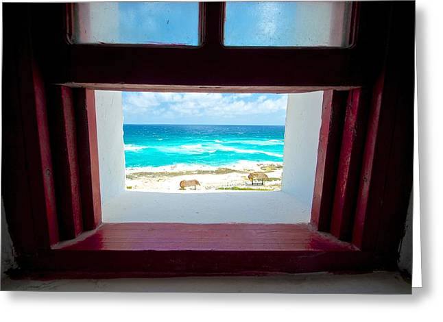 Outlook Greeting Cards - Open Window Greeting Card by Tammy Richardson