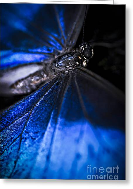 Lepidoptera Greeting Cards - Open wings of Blue Morpho butterfly Greeting Card by Elena Elisseeva