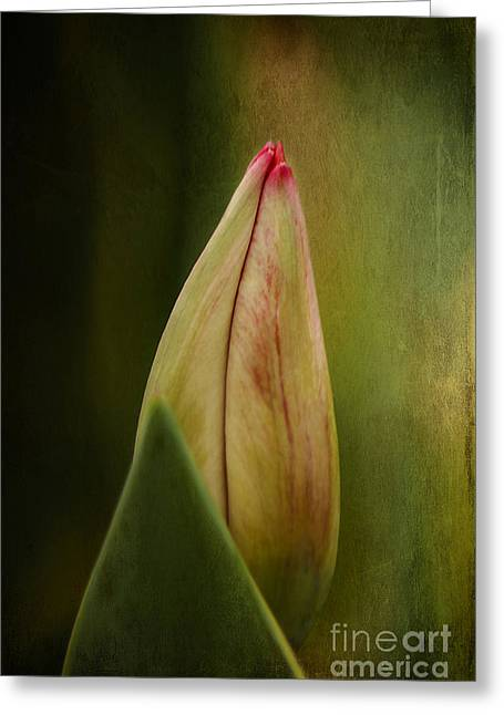 Close Focus Floral Greeting Cards - Opening Soon Greeting Card by Darren Fisher