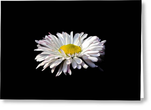 Blossoming Greeting Cards - Opening up Greeting Card by Sumit Mehndiratta