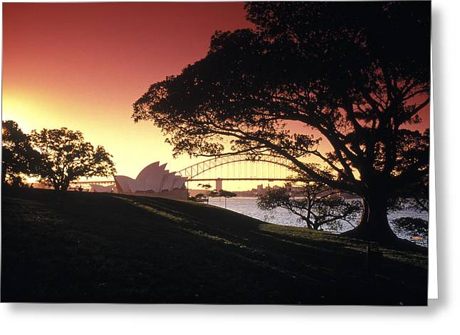 Sydney Harbour Greeting Cards - Opera Tree Greeting Card by Sean Davey
