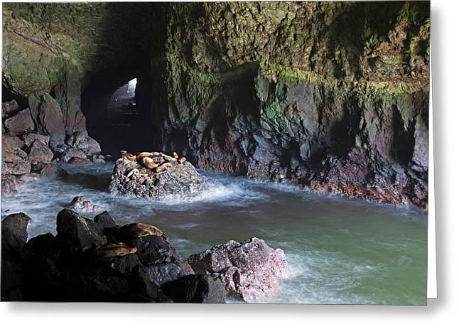 Or, Oregon Coast, Sea Lion Caves Greeting Card by Jamie and Judy Wild