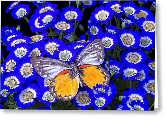 Gorgeous Flowers Greeting Cards - Orange and Gray Butterfly Greeting Card by Garry Gay