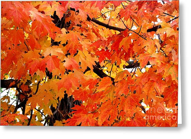 Leaf Peepers Greeting Cards - Orange And Reds And Some Yellow Too Greeting Card by Eunice Miller