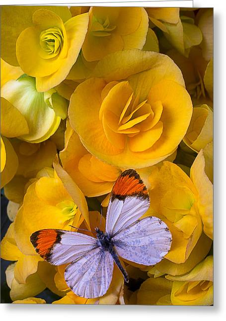 Begonias Greeting Cards - Orange and white butterfly Greeting Card by Garry Gay