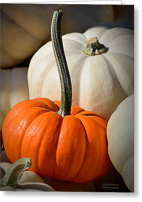 Julie Palencia Greeting Cards - Orange and White Pumpkins Greeting Card by Julie Palencia