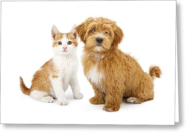 Mutt Greeting Cards - Orange and White Puppy and Kitten Greeting Card by Susan  Schmitz