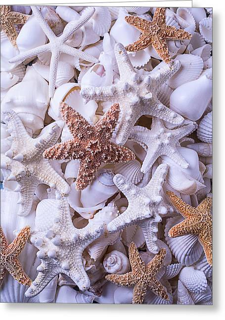 Shell Texture Greeting Cards - Orange and White Starfish Greeting Card by Garry Gay