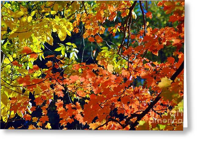 Orange And Yellow Greeting Card by Kathleen Struckle