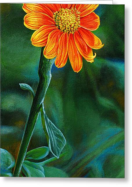 Aster Paintings Greeting Cards - Orange Aster Greeting Card by Cara Bevan