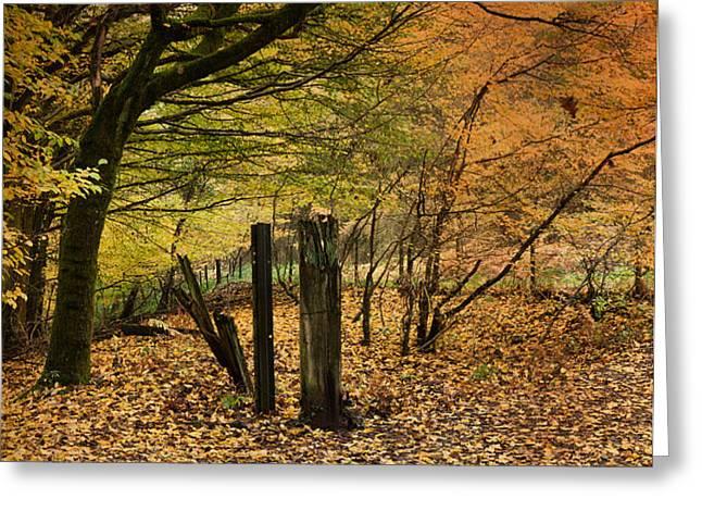 Orange Autumn Greeting Card by David Tinsley