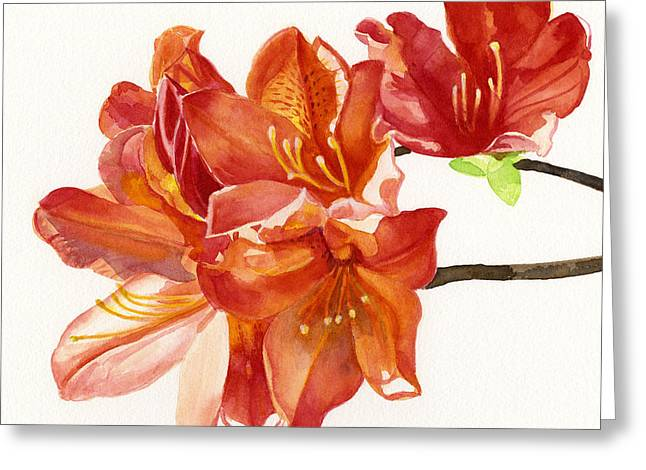 Close-up Paintings Greeting Cards - Orange Azalea Square Design Greeting Card by Sharon Freeman