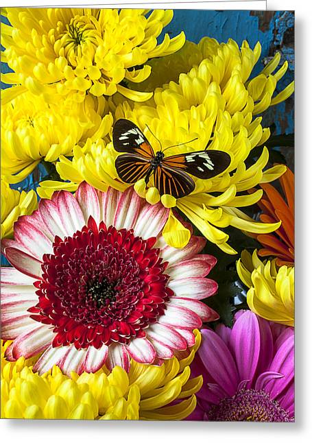 Antenna Greeting Cards - Orange black butterfly with red mum Greeting Card by Garry Gay