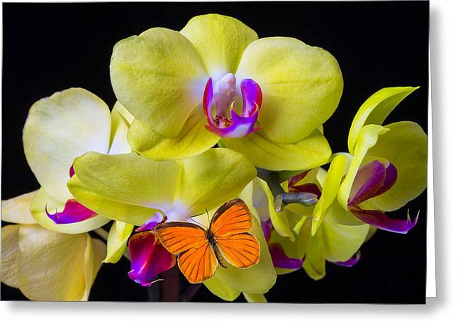Yellows Greeting Cards - Orange butterfly and yellow orchids Greeting Card by Garry Gay