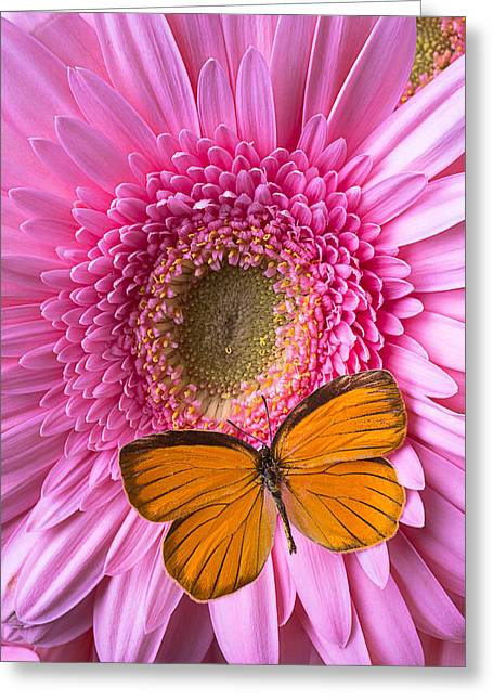 Orange Butterfly On Pink Daisy Greeting Card by Garry Gay