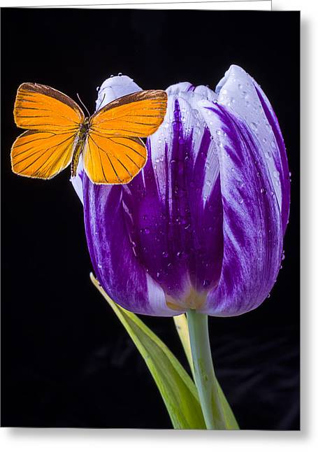 Rain Drop Greeting Cards - Orange Butterfly on Purple Tulip Greeting Card by Garry Gay