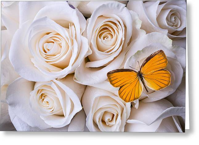 Soft Orange Greeting Cards - Orange butterfly on white roses Greeting Card by Garry Gay