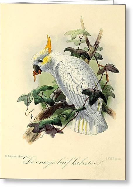 Orange Cockatoo Greeting Card by J G Keulemans