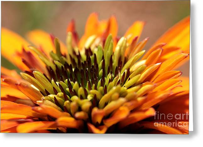 Abstracted Coneflowers Greeting Cards - Orange Coneflower Greeting Card by Kenny Glotfelty